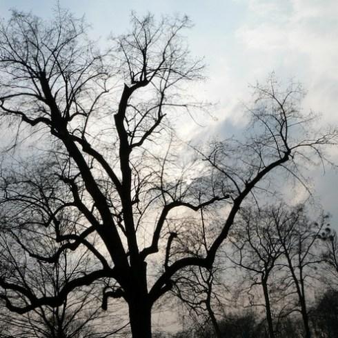 arbre-artiste-1